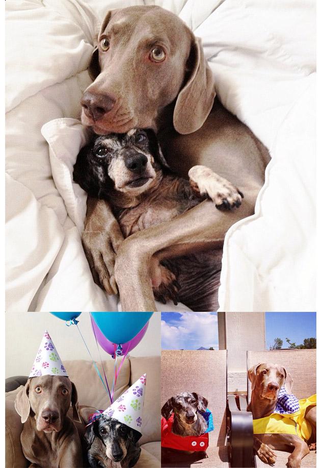 Animales en Instagram - harlowandsage
