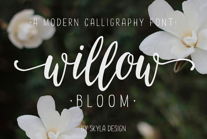 Fuente Willow Bloom